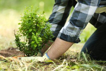 Must-Do's for a Successful Landscape Season!