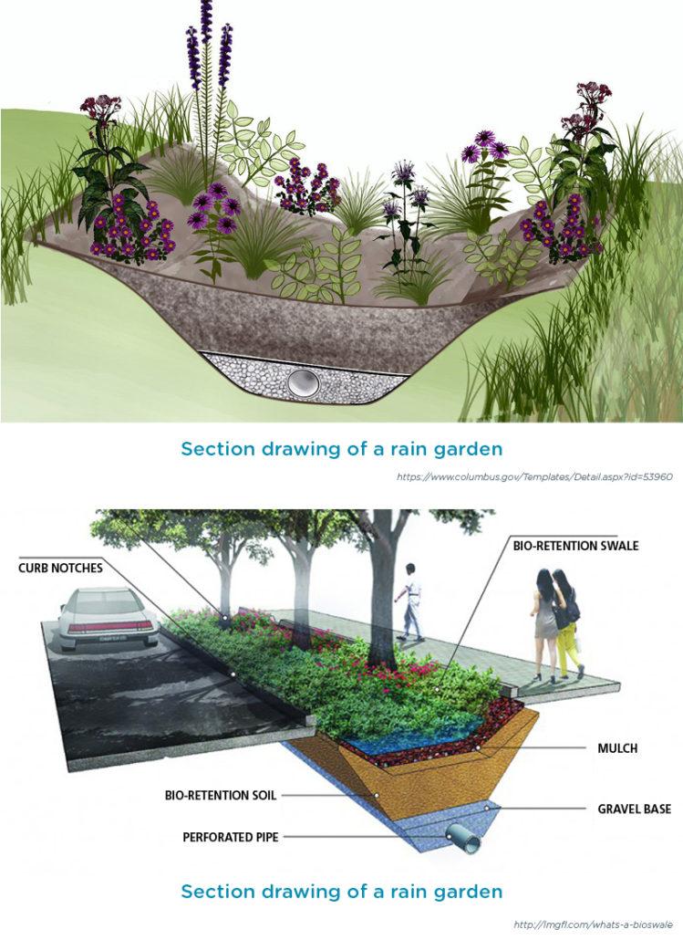 Sustainable landscaping technique: rain garden