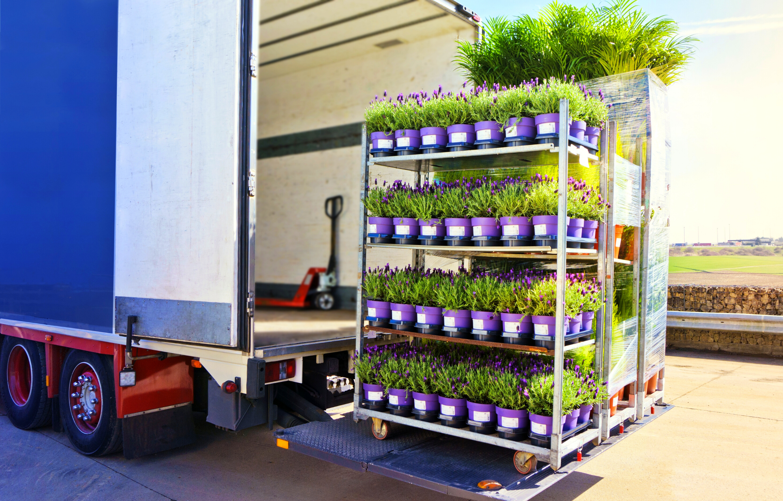 Truck being loaded with plants