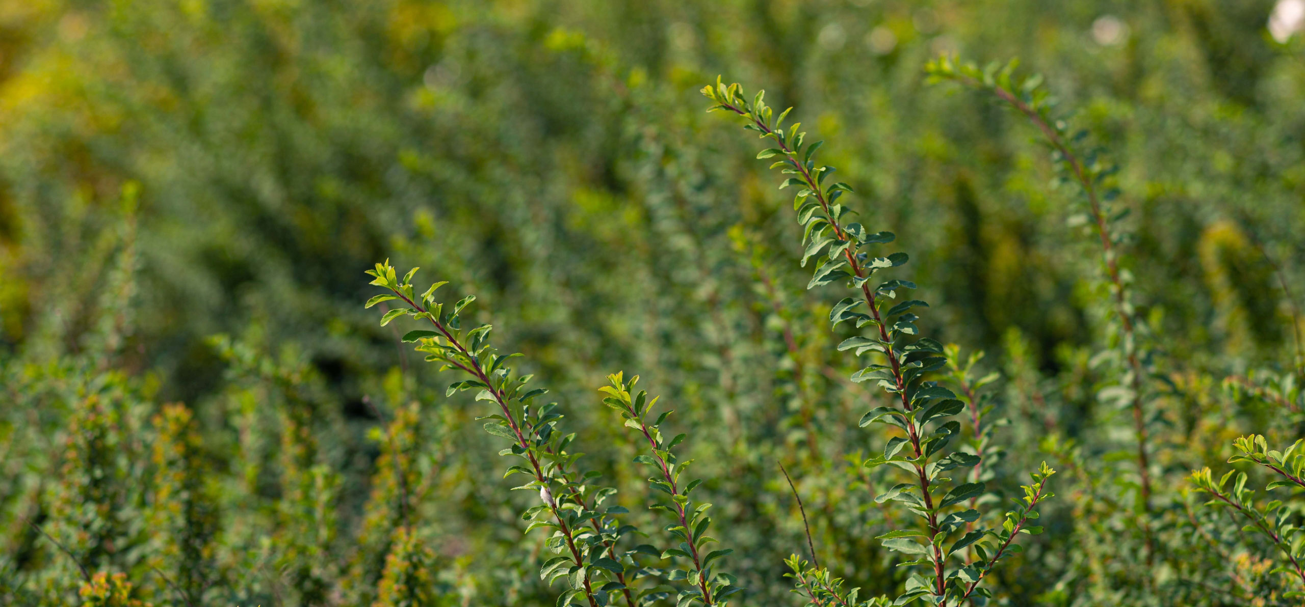Learn how Gomaterials provide wholesale plant nursery supplies.