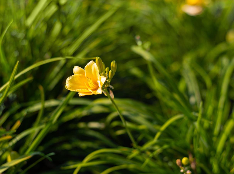 Learn how Gomaterials help garden nursery supplies wholesale.