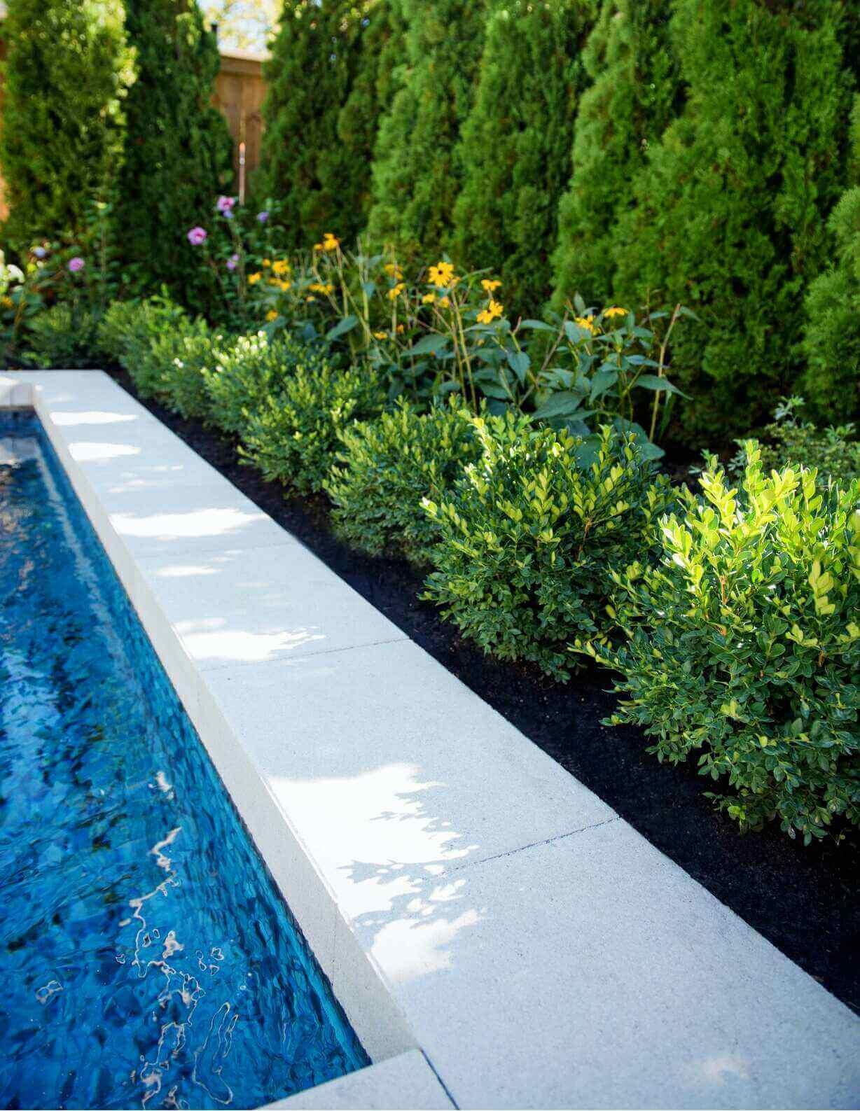 poolside shrubs