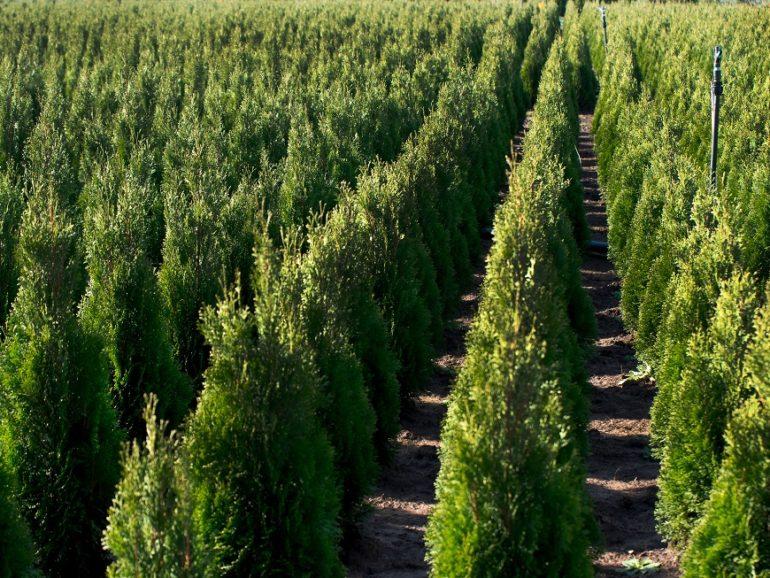 Les plantes et les arbres les plus vendus en 2020