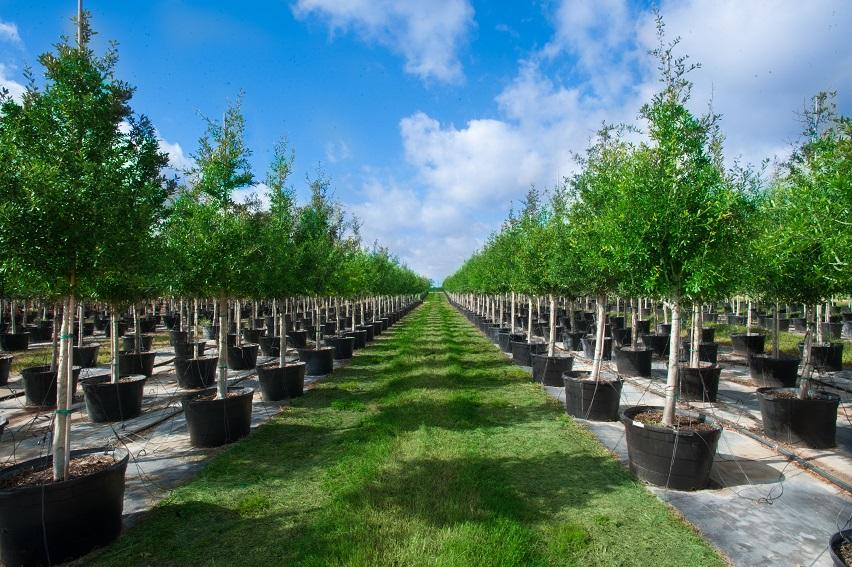 Everde Growers Nursery